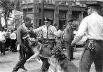 Birmingham, May04/63_dogs