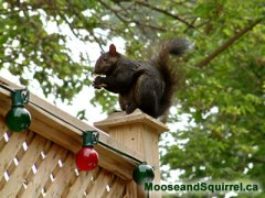 www.MooseandSquirrel.ca